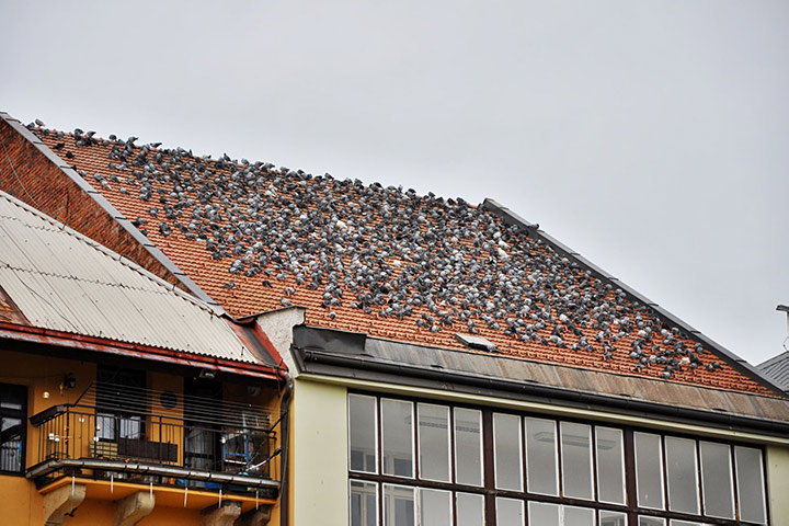 A2B Pest Control are able to install spikes to deter birds from roofs in Chelsea.