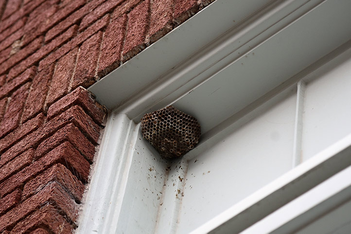 We provide a wasp nest removal service for domestic and commercial properties in Chelsea.
